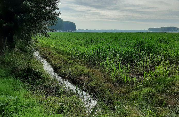 Gewassen staan er fris bij en sloten zijn goed gevuld na een 'natte, Hollandse julimaand'. Slootje in de Oranjepolder tussen Oosterhout en Raamsdonksveer.