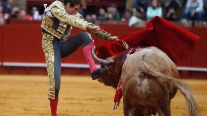 Matador overleeft als bij wonder voor tweede keer op rij bloedig stierengevecht