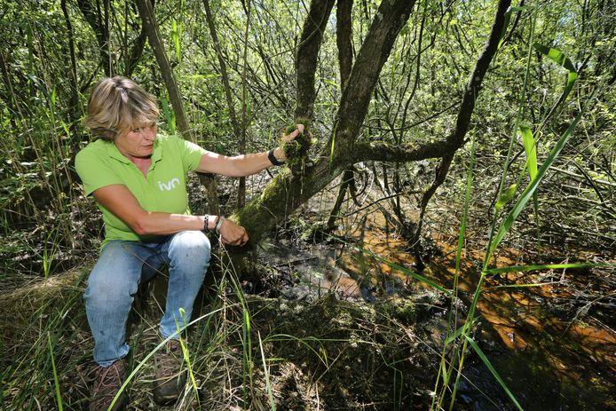 IVN-gids Corrie van Haperen laat zien hoeveel water veenmos vasthoudt. Het afstervende mos vormt later één grote spons in de bodem.
