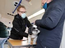 Rijdende dierenarts Tim komt naar je toe in Groesbeek en Millingen: 'Diergeneeskunde laagdrempeliger maken'