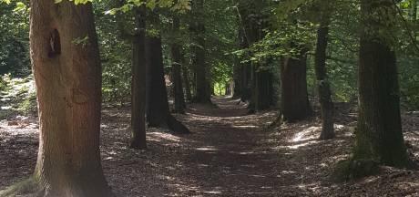 Staatsbosbeheer hervat excursies door natuurpracht van het Springendal