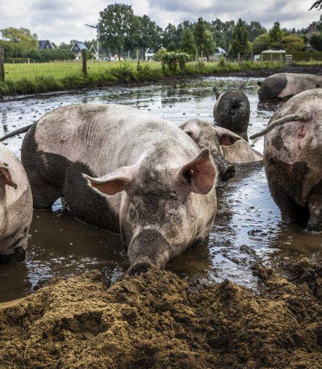 Europa kiest voor duurzame landbouw: grote gevolgen voor boeren