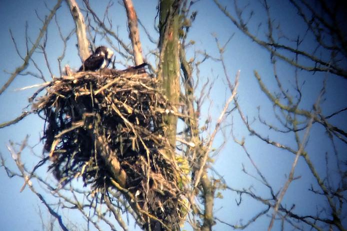 Hetzelfde nest, vorig jaar.