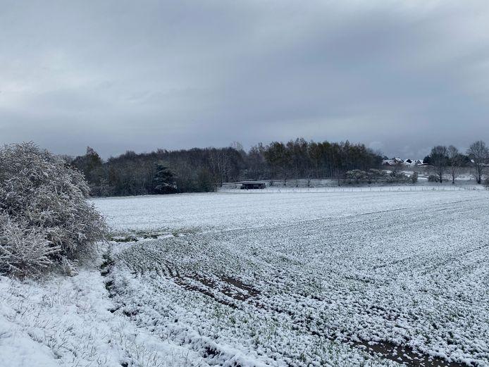 Winterbeelden in Aarschot.