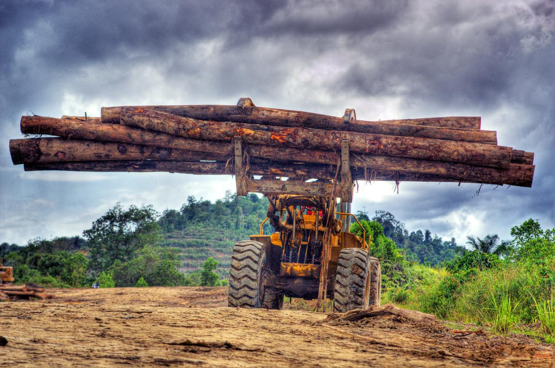 Op het Indonesische eiland Borneo moet regenwoud plaatsmaken voor palmolieplantages.