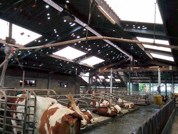 De hagelstorm van 23 juni 2016 veranderde de stal van melkveehouder Theo Sonnemans in gatenkaas