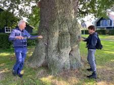 Delden is 'eikenwalhalla' van Nederland: 'Nergens staan zoveel monumentale bomen bij elkaar'