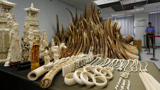 China gaat ivoorhandel verbieden tegen eind 2017