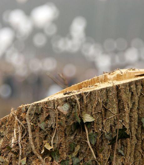 Leusden gaat 300 afgeschreven bomen kappen, maar niet altijd komen er nieuwe voor terug