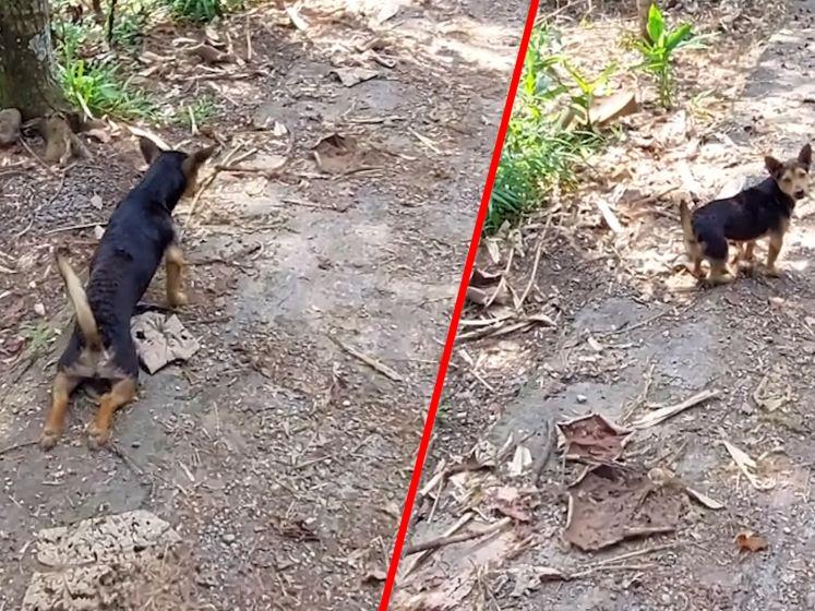 Hond houdt toeristen voor de gek
