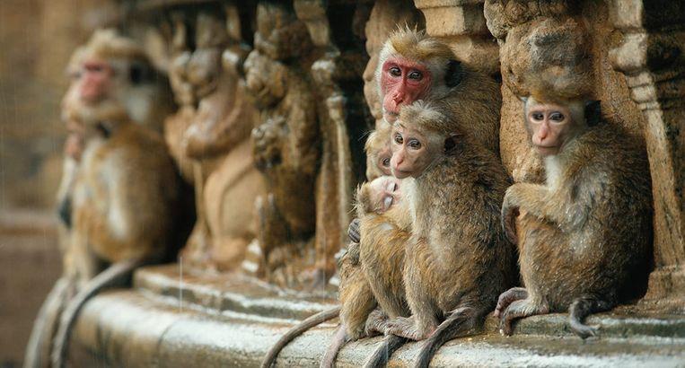 Monkey Kingdom Beeld Disney+