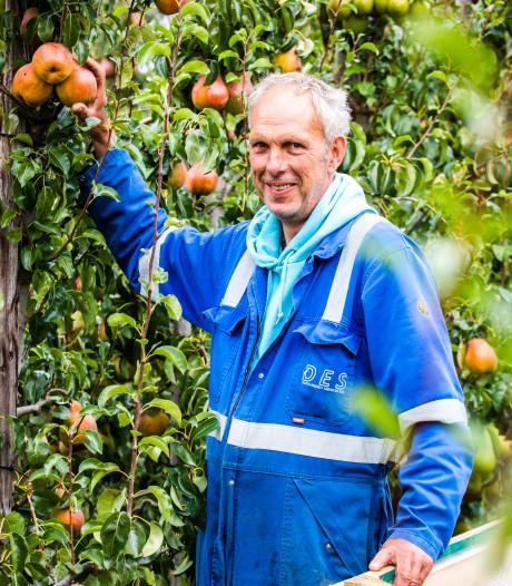 Rode peer Sweet Sensation uit Hoeksche waard is te exclusief voor supermarkt