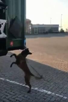 Deze slimme hond speurt inklimmers op in trailer bij Hoek van Holland