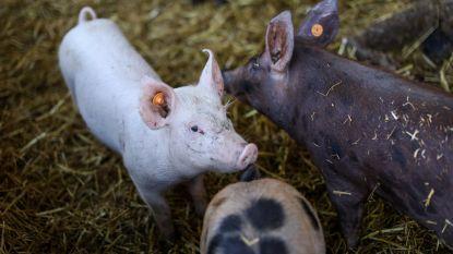 Geen varkens meer in kinderboerderij De Zeven Torentjes