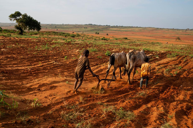 Kinderen ploegen de dorre grond in het zwaar getroffen 'Grand Sud' van Madagaskar.  Beeld REUTERS