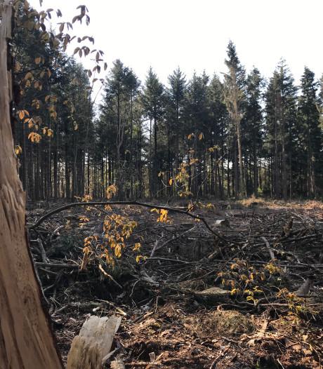 Verbazing over kaalslag van bomen in Knegsel