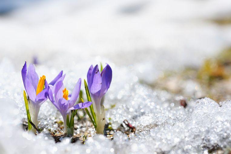 Lente sneeuw mei Beeld Getty Images