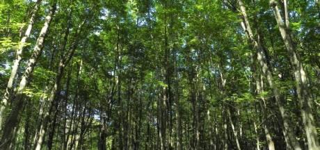 Het eerste boompje gaat de grond in voor nieuw bos bij Made