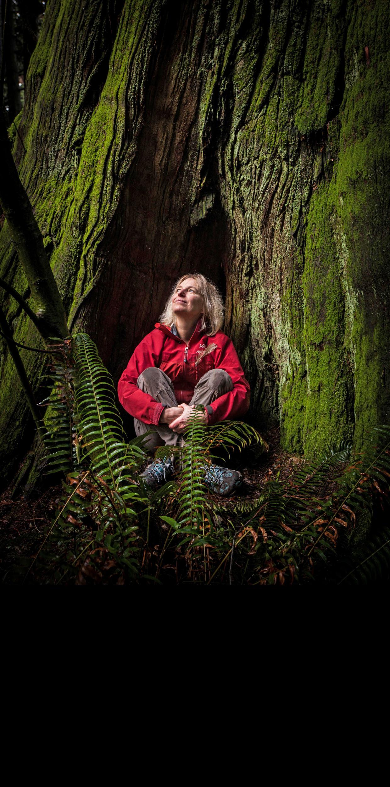 'Stervende bomen geven in een laatste inspanning alle koolstof die ze nog hebben aan bomen in de buurt, en het meest aan hun eigen nakomelingen' Beeld Diana Markosian