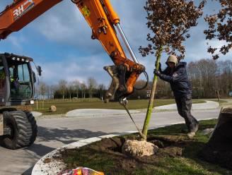 Eeklo wordt groener: 46 extra bomen, 92 struiken, en 5.823 vaste planten