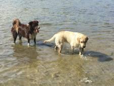 """Trois chiens tués par un poison foudroyant: """"Je n'ai jamais vu ça"""""""