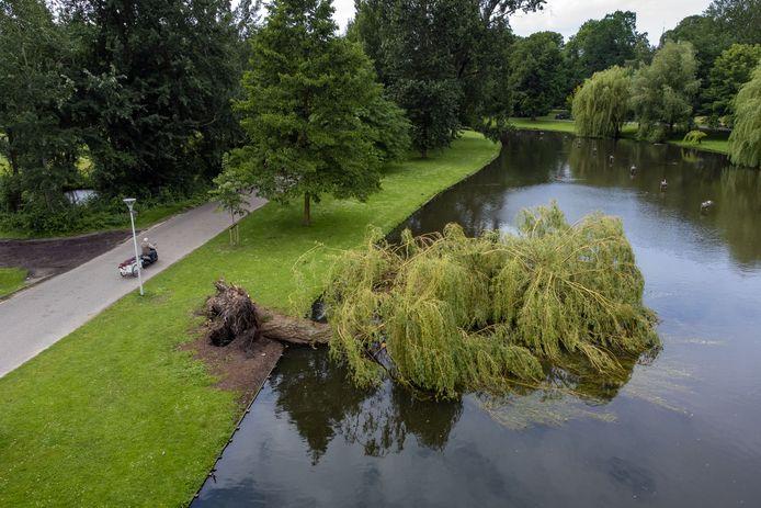 Tijdens het noodweer van afgelopen vrijdag zijn er tientallen bomen gesneuveld binnen de gemeente Kampen. In het Stadspark lag een grote wilg in het water.