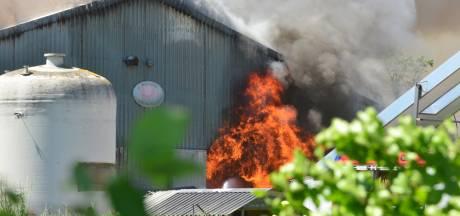 Duizenden varkens dood bij zeer grote stalbrand Nederweert