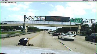 """Agent blokkeert de snelweg om overreden hondje te redden: """"Mijn hart brak, tot ik het zag ademen"""""""