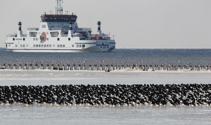 De veerboot Sier vaart op weg van Ameland naar de haven van Holwerd.