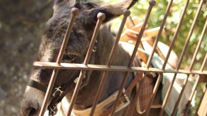 Testé pour vous: randonner avec un âne dans le Namurois, une expérience insolite et reposante