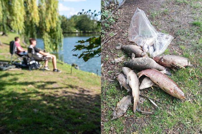 De gemeentelijke visvijver naast het gemeentehuis heeft te kampen met vissterfte.