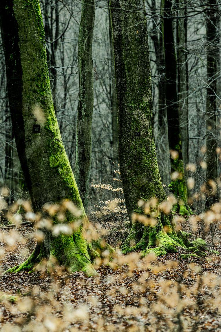 null Beeld © Franky Verdickt