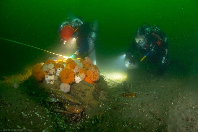 Borkumse stenen expeditie Beeld Udo van Dongen