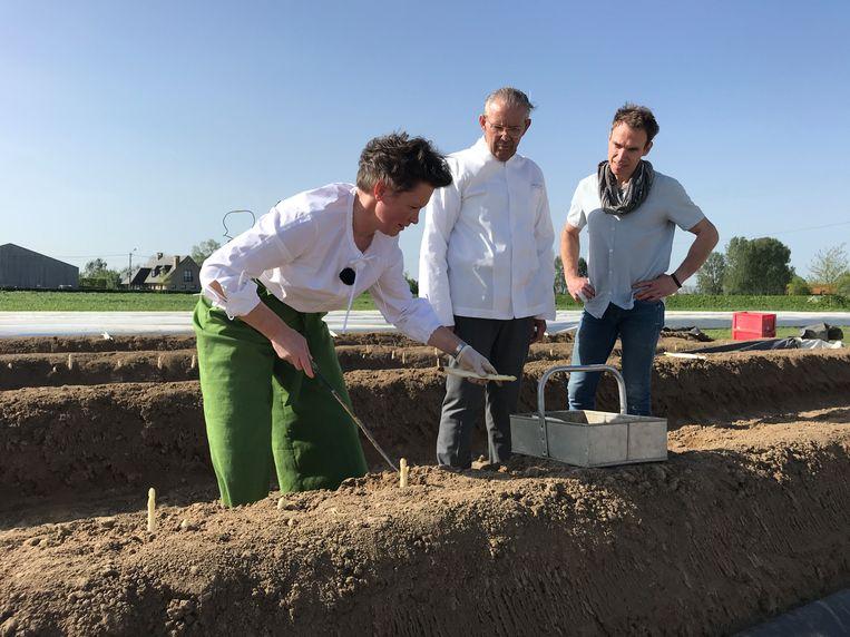 Chef-koks Peter Goossens en Giovani Oosters krijgen een rondleiding op het aspergebedrijf van Ilse Vancraeynest.