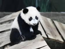 Hoe overleven dierentuinen de lockdown? Dier adopteren kost tussen de 72 en 480 euro per jaar