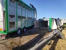 Une dizaine de vaches tuées dans un accident de la route