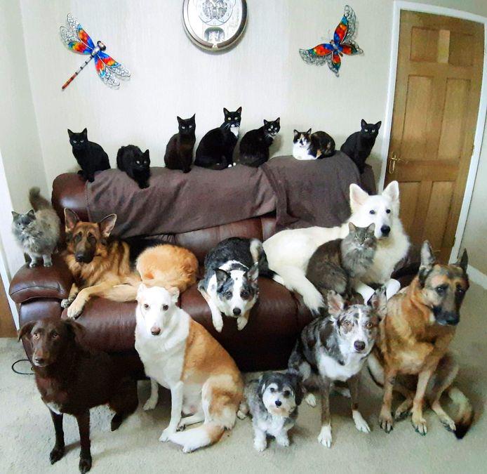 Op de foto van achteraan links naar vooraan rechts: Dinky, Jakie, Opal, Paddy, Socks, Safi, Cinders, Dusty, Max, Sheba, Smokey, Storm, Ruby, Ben, Teddy, Rio en Mishka.