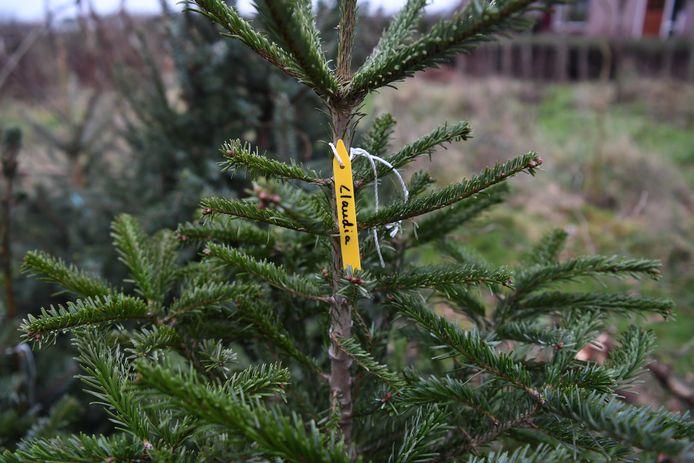 De gemeente heeft de gebruiker een last onder dwangsom opgelegd wegens illegale kerstbomenhandel (foto ter illustratie).