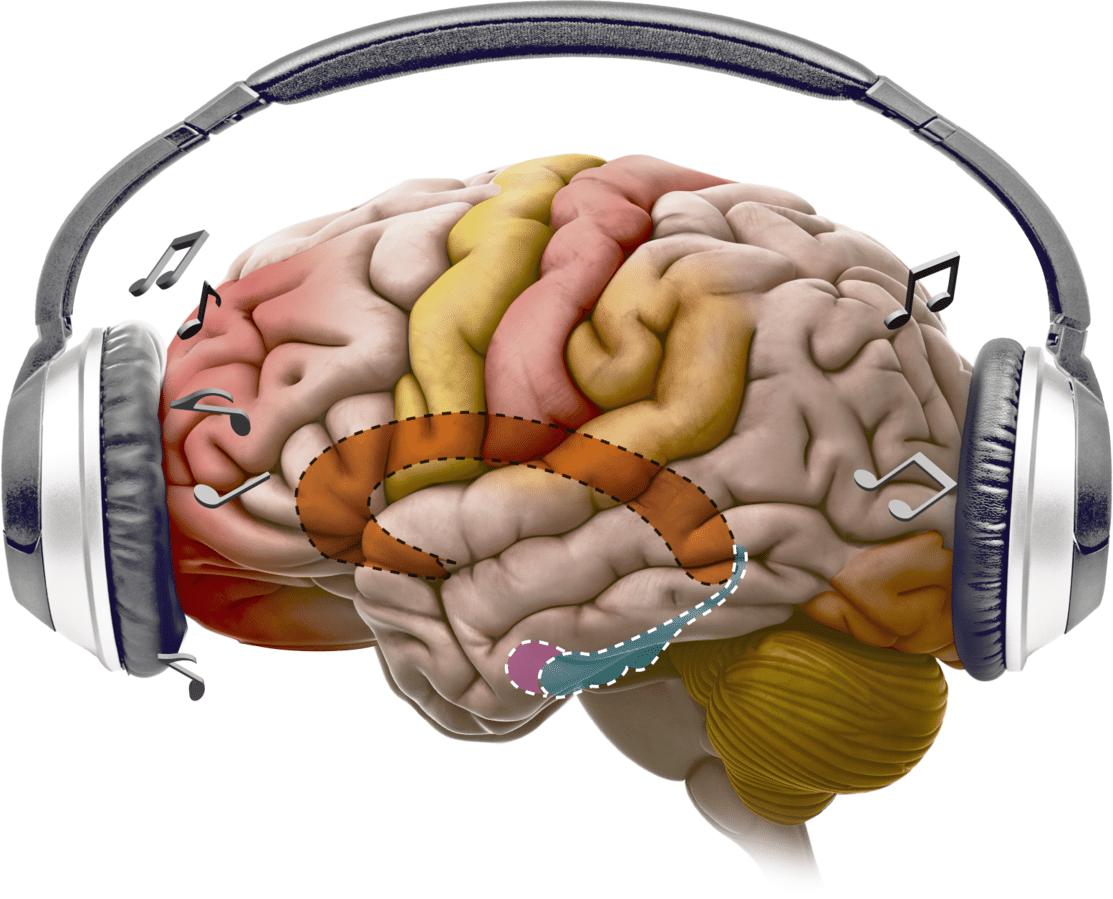 Brein Muziek