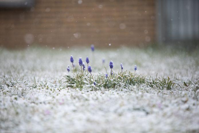 In Lummen leveren de sneeuwvlokken alvast mooie beelden op.