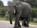 """""""Une érection d'éléphant a gâché mes vacances."""""""