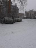 Ook de Antwerpse Zoo lag zaterdagnamiddag onder een fijn laagje sneeuw.