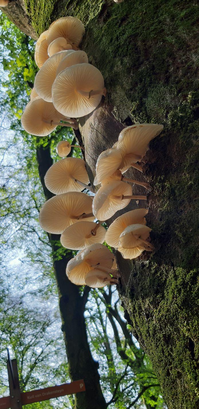 Sonja Snoek fotografeerde de nazomerzon op deze mooie paddenstoelen in wandelgebied Lage Vuursche.