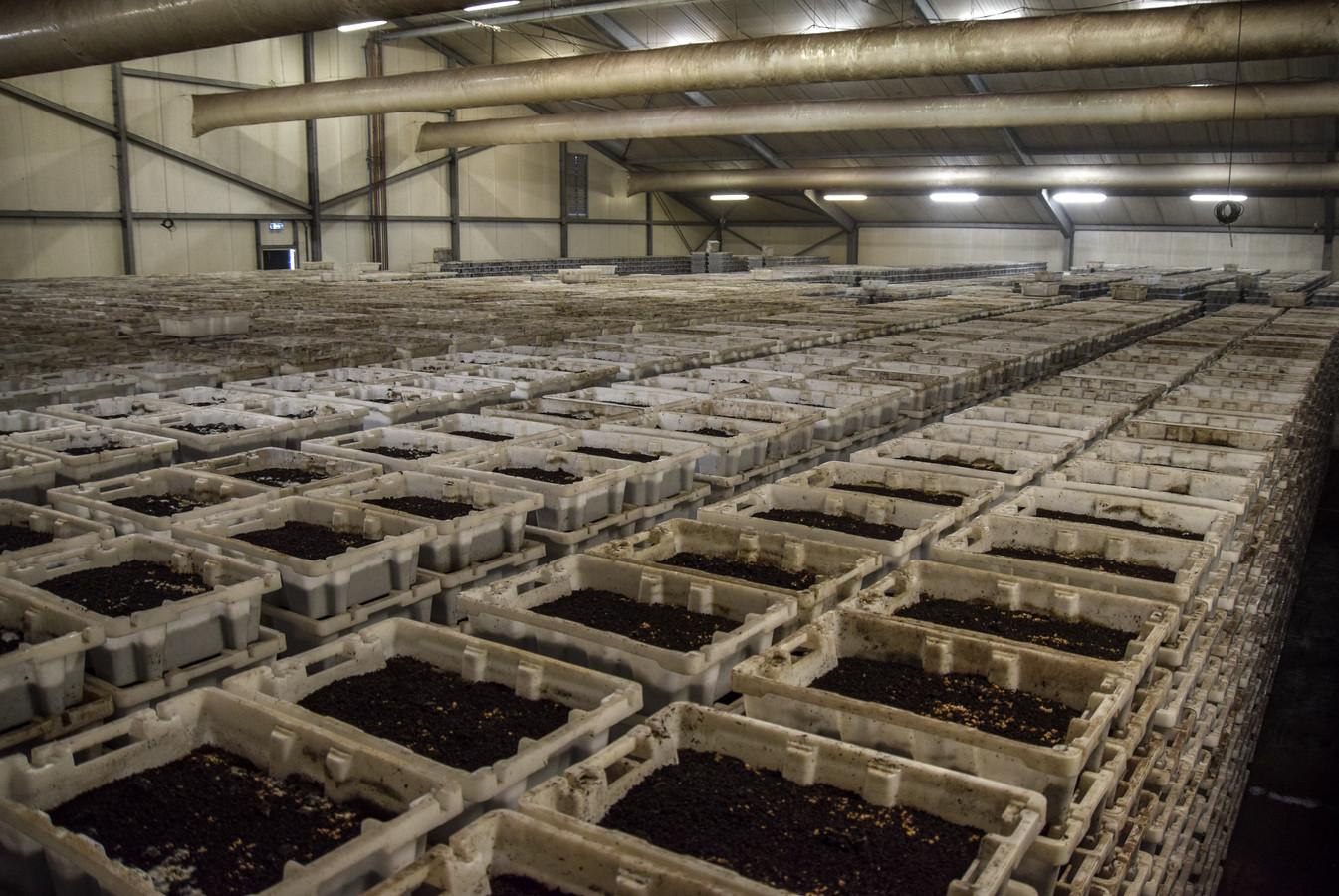 De wormenkwekerij in Almkerk wil uitbreiden. Omwonenden hebben daar bezwaar tegen.