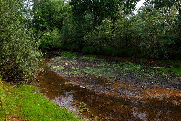 Afgelopen zomer stond het waterpeil van de Antitankgracht aan Fort Ertbrand in Kapellen dramatisch laag.