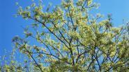 De blaadjes vallen van de bomen in de ... zomer