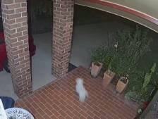 Un chien-chien fait fuir des cambrioleurs