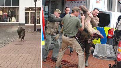 Wilde zwijnen houden lelijk huis in Duits stadje: vier gewonden
