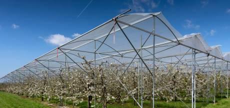 Maasdriel zorgt voor verrassing bij Raad van State: spuitzone van 50 meter voor fruittelers is in veel gevallen niet meer nodig