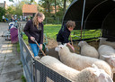 Angela Mouthaan en Melvin Walraven aan het werk op kinderboerderij De Klepperhoeve in Middelburg.